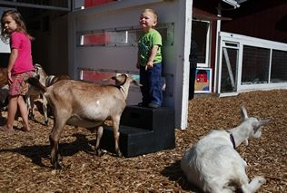 Mark Mulligan / The HeraldQuaid Jones of Lake Stevens can't believe the herd of goats surrounding him and his sister, Tessa, at the Forest Park petting zoo in 2012.