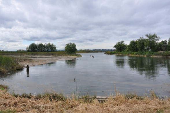 The collaboration between tribal, local, county, state, and federal agencies will restore the natural water flow in the 400 acre estuary. Photo By Monica Brown