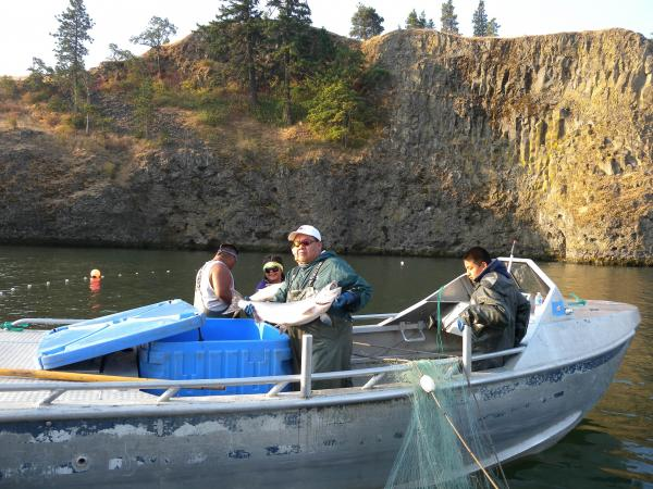 Eat insanely fresh native salmon four tribes open fishery for Salmon fishing columbia river