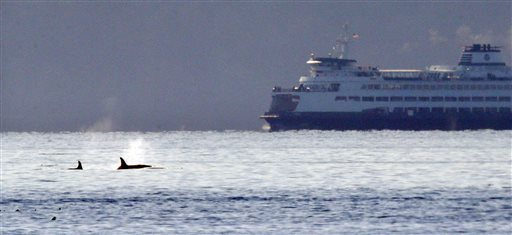 Credit Elaine Thompson / AP PhotoA pair of orca whales swim in view of a state ferry crossing from Bainbridge Island toward Seattle in the Puget Sound Tuesday, Oct. 29, 2013, as seen some miles away from Seattle.
