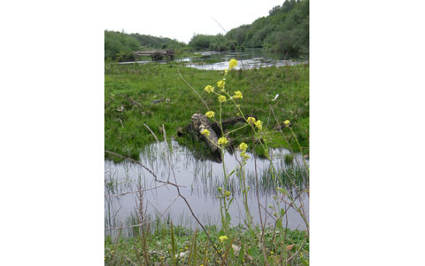 Klamath River Estaury Wetlands