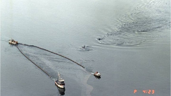 Killer whales swimming in Prince William Sound alongside boats skimming oil from the Exxon Valdez oil spill. Scientists report that orca populations there have not recovered and oil is still being found. | credit: (State of Alaska, Dan Lawn) | rollover image for more