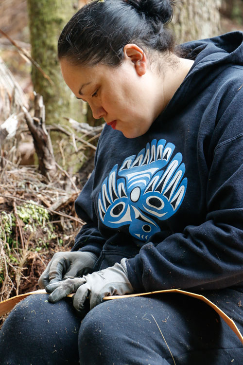 Tulalip tribal member Chelsea Craig separates the inner bark from the outer bark on a strip of red cedar she harvested during an annual cedar harvesting event organized by Tulalip Forestry on June 27-28.Photo/ Brandi N. Montreuil, Tulalip News