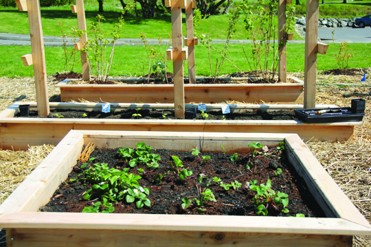 New garden boxes have been established for the various fruits and vegetables. Photo/Micheal Rios