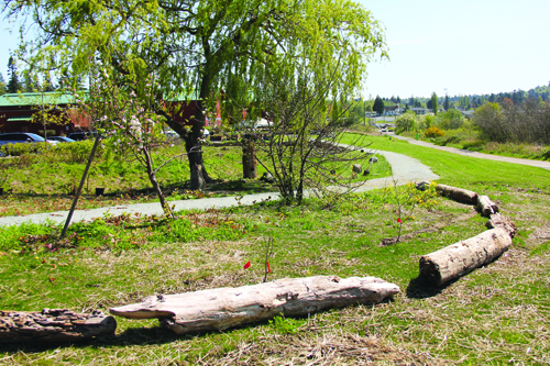 View of the Wellness Trail as it leads to the garden. photo/Micheal Rios