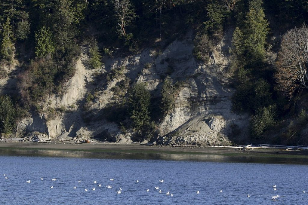 Evidence of a recent slide along a hillside near Arcadia Road on the Tulalip Reservation on Oct. 12. (Ian Terry / The Herald)