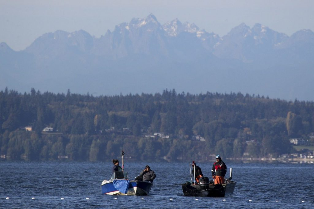 Fishermen in Tulalip Bay with the Olympic Mountains looming in the background. (Ian Terry / The Herald)