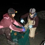 Stillaguamish biologists Franchesca Perez, left, and Jennifer Sevigny anchor a cage of mussels off Camano Island.