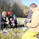 Wildlife biologists from Stillaguamish, Tulalip and Western Washington University sample DNA from elk scat.