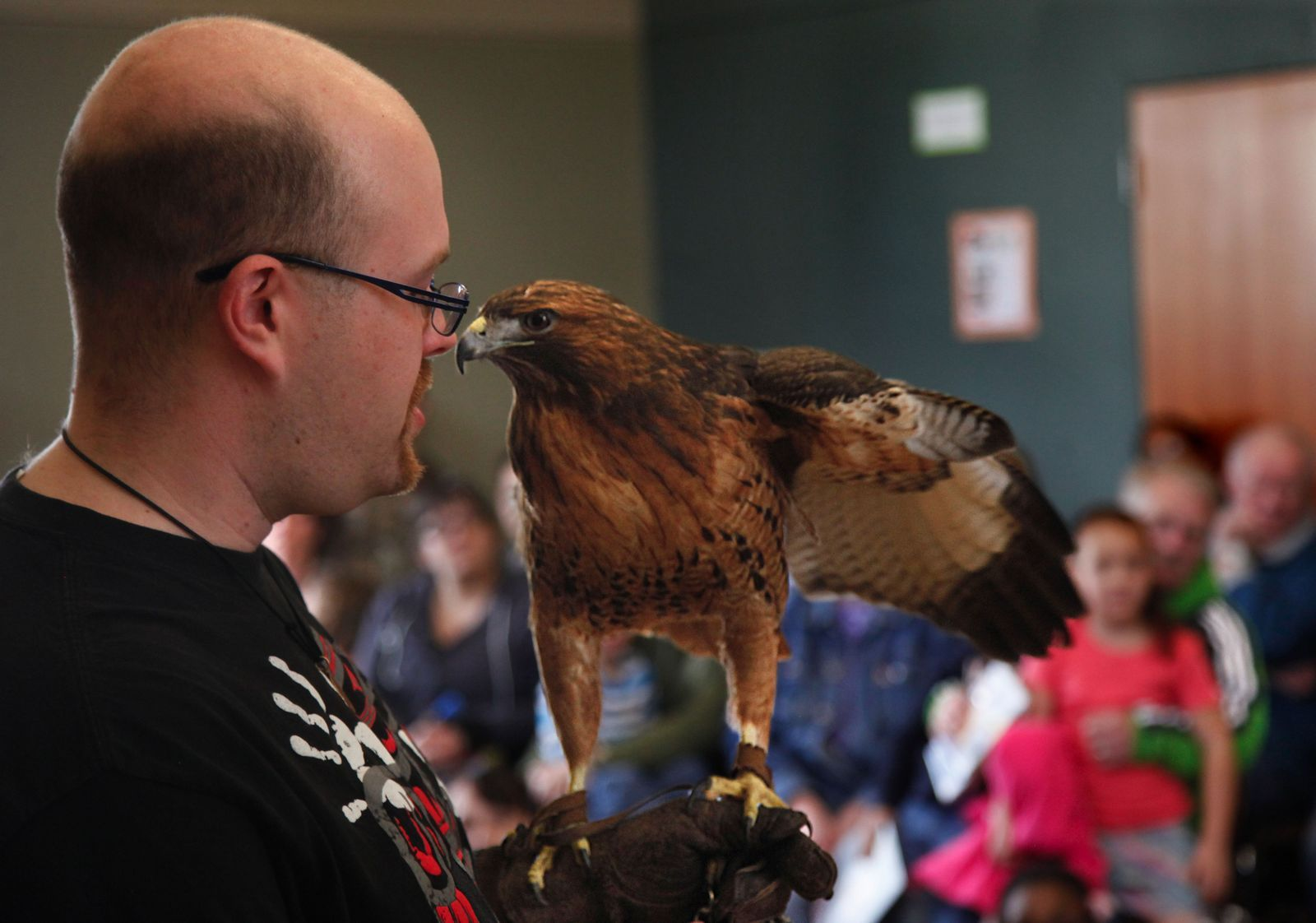 Dan Bates / The HeraldSarvey Wildlife Center volunteer Robert Lee holds a red-tailed hawk with only one wing Friday at the Snohomish Library. Having lost a wing, the hawk will remain at Sarvey for the rest of its life, Lee said.