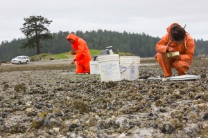 Swinomish biologist Julie Barber and technician Courtney Greiner survey juvenile manila clams on Lone Tree Point.