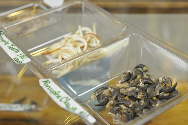 Porcupine teeth and claws are among the variety of natural and manmade items for sale in the Four Shells store.Jesse Tinsley photo