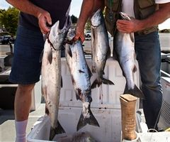Dan Bates / The HeraldPhil Flick (left) and Tom Goggin, both of Lynnwood, show four of their seven pink salmon, one shy of their limit, to Jeff Lowery of the Washington State Fish and Wildlife Department after pulling their boat out at Mukilteo last week.