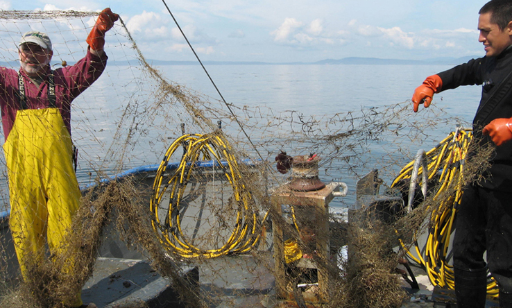 When spread out, nets cover a significant amount of habitat.Source: The Northwest Straits Marine Conservation Initiative