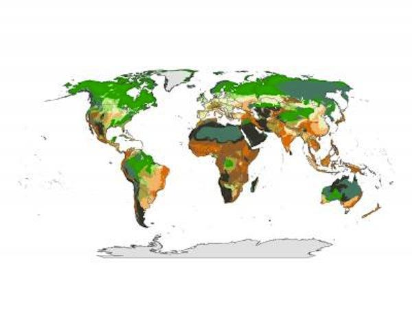 Wildlife Conservation SocietyThe map illustrates the global distribution of the climate stability/ecoregional intactness relationship. Ecoregions with both high climate stability and vegetation intactness are dark grey. Ecoregions with high climate stability but low levels of vegetation intactness are dark orange. Ecoregions with low climate stability but high vegetation intactness are dark green. Ecoregions that have both low climate stability and low levels of vegetation intactness are pale cream.
