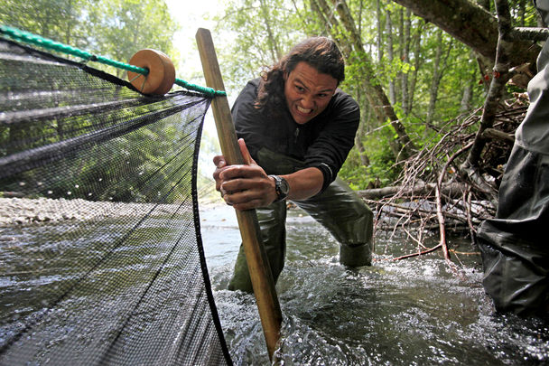 Oceanographer Daniel Hernandez strains to pull on the end of a seining net on the Elwha River in an effort to count the fish in a designated area.