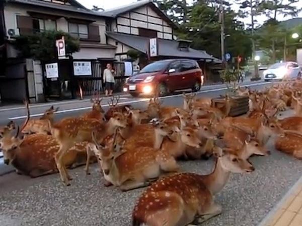 bambi_sit-in_japan-nara_park-youtube