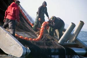 Lummi tribal fishermen prepare a purse seine during the 2011 Fraser sockeye fishery. The tribe has declared 2013 a fisheries economic disaster after poor returns canceled this year's fishery worth $1.3 million.