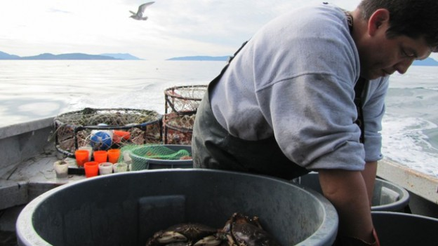 Tribal treaty fishing rights give Washington tribes the opportunity to weigh in on, and even block, projects that could impact their fishing grounds.(Ashley Ahearn/KUOW Photo)