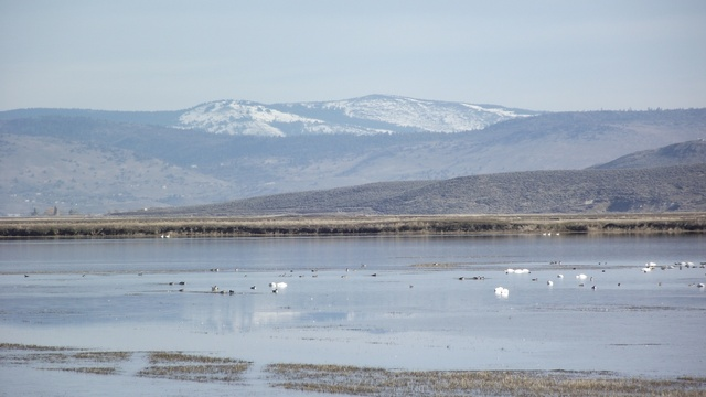 Wildlife refuge in the Lower Klamath basin