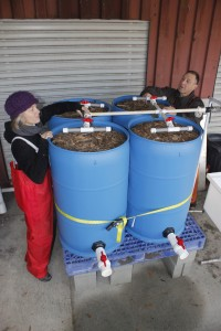 WSU toxicologist Jenifer McIntyre and USFW biologist Steve Damm adjust the spouts for the barrels mimicking rain gardens for stormwater filtration.