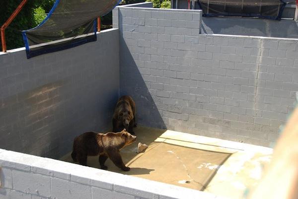 bear_park_violations-courtesy_peta_status_of_bear_welfare_in_cherokee_north_carolina_report_pg_47_dsc_0151_db
