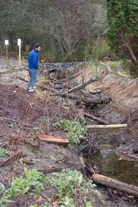 Tulalip biologist Brett Shattuck strolls along the recently restored, and named, Greenwood Creek.