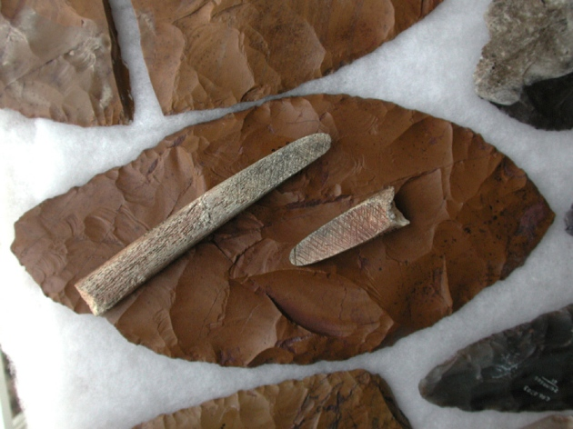 Source: Robert L. WalkerHumans from the Clovis culture used characteristic stone points (brown) and rod-shaped bone tools.