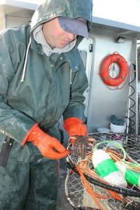 George Stearns, shellfish biologist for the Puyallup Tribe, inspects a sick sea star caught in the tribe's crab monitoring study.