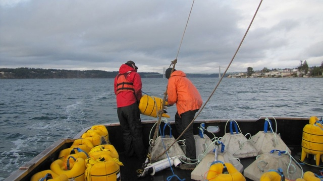 The crew of the research vessel Chasina gets ready to drop an acoustic telemetry receiver 300 feet down into Puget Sound. The device will record tagged steelhead as they swim out of their spawning rivers. | credit: Ashley Ahearn