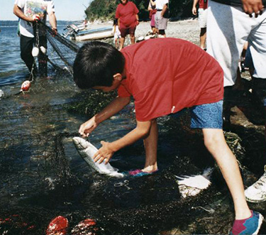A boy pulls salmon from a net.Photo Courtesy of Tulalip Tribes