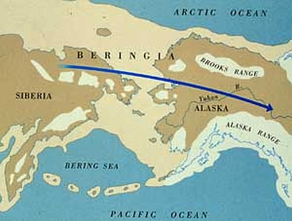 Beringia map, courtesy of Illinois State Museum