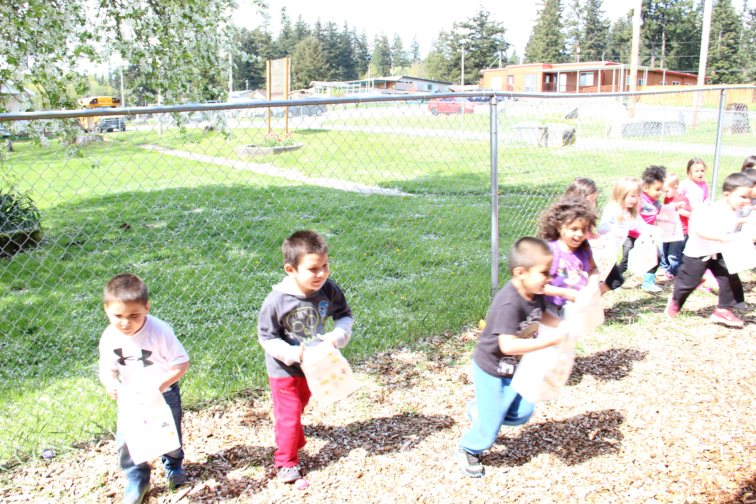And they're off! Children race to find the most Easter Eggs. Photo: Andrew Gobin/Tulalip News