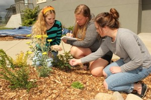 Hanna Bridgham, Cassidy Forler and Tessa Rurup, students at Eatonville High School, inventory plants in a new raingarden built in a courtyard at their school.