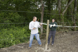 Tulalip tribal staff build a five-strand electric fence to keep elk out of a planted corn field.