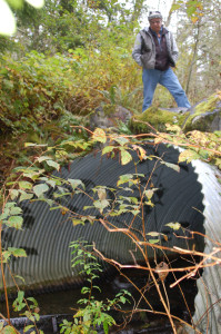 Billy Frank Jr. stands on top of a culvert in 2008. photo/Northwest Indian Fisheries Commission