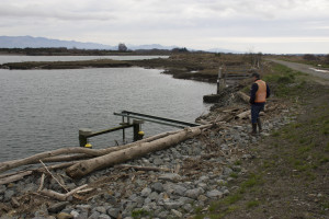 Swinomish environmental director Todd Mitchell observes a self-regulating tide gate that is mostly under water in the Smokehouse tidelands.