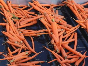 carrots-2a9247cd6d155f2b94b85b136dc4cfbfba0fc6be