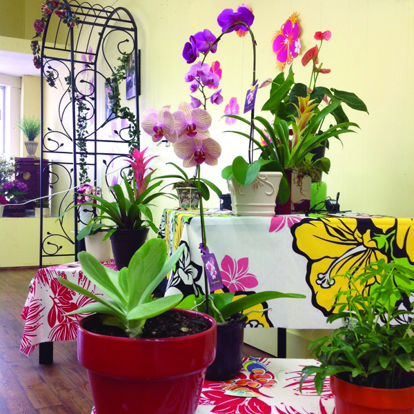 Bouquets of Sunshine's current specialty is tropical plants and orchids. Photo/Kim Kalliber