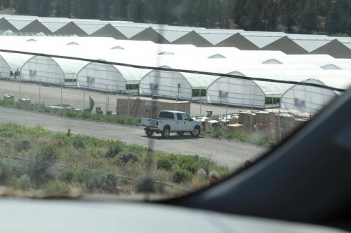 A surveillance photo taken in June 19 from the northbound shoulder of Highway 395 in rural Modoc County shows part of a large marijuana manufacturing site on the XL Ranch, which is American Indian Land belonging to the Pit River Tribe. The white pickup truck belongs to a private security firm contracted to guard the site. Photo/ Special Agent Charles Turner, U.S. Bureau of Indian Affairs